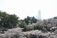 tatsuno (5)