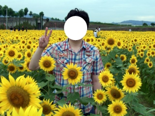 ひまわり畑12