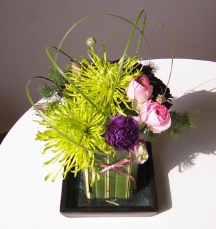 flower brog 33