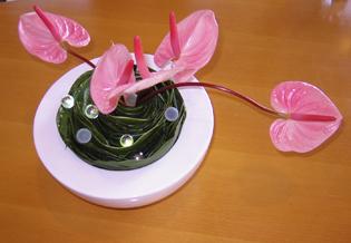 flower brog 42