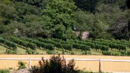 僧院のワイン畑