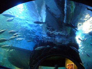 海のトンネル