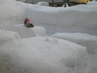 冷たいから降りちゃうもんね・・・