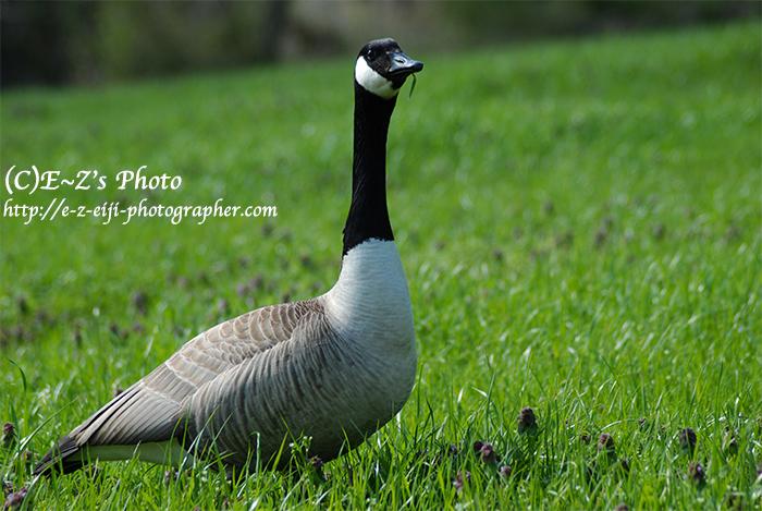 名も知らぬ美しき鳥