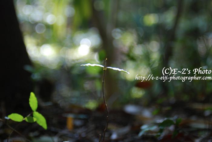 ひとひらの葉