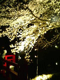 DCF_0138yozakura.jpg