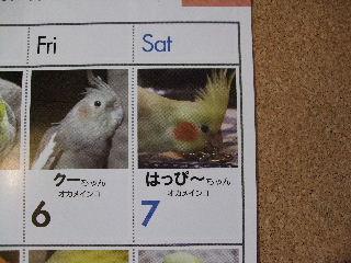 2008_1121ぷーすけ0053