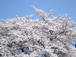 2009_0407ぷーすけ0048