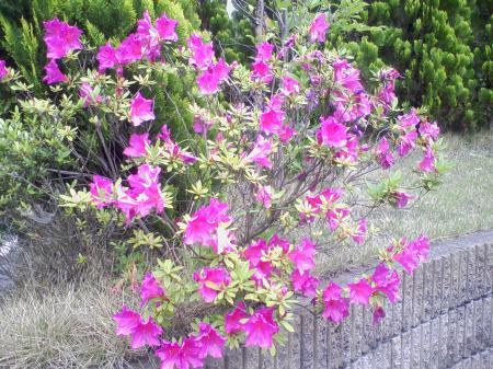 玄関花 (9)