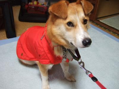 新しいレインコート着せてみました~