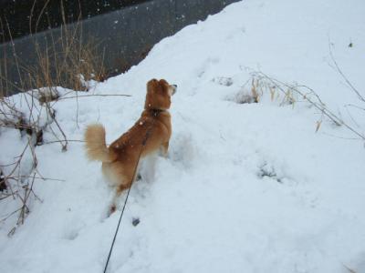 雪ですから~!