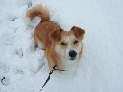 雪の中を楽しそうに走りまわる姿を見るのが大好きだったなぁ。