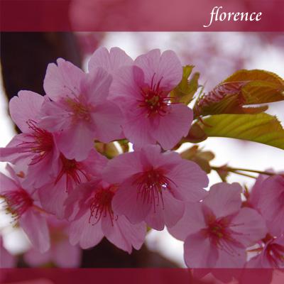 桜090201