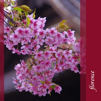 桜090202
