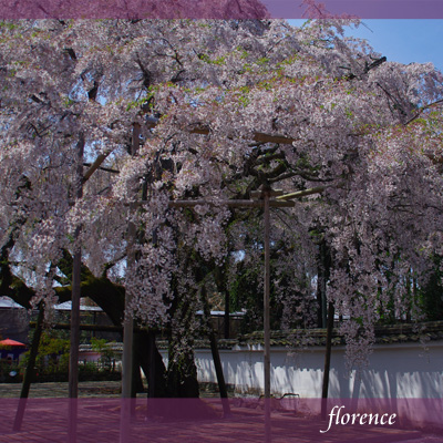 醍醐寺090301_edited-1