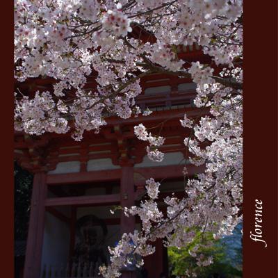 醍醐寺090303_edited-1