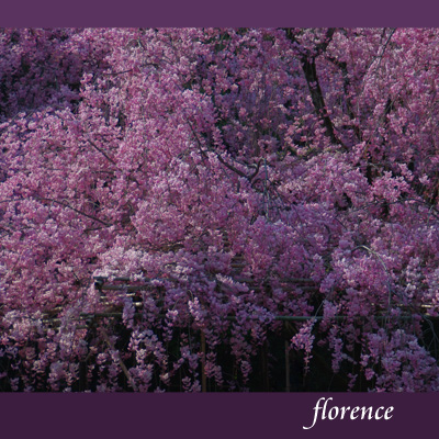 平安神宮090403_edited-1