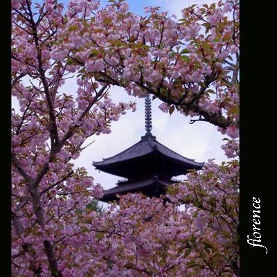 仁和寺090401_edited-1