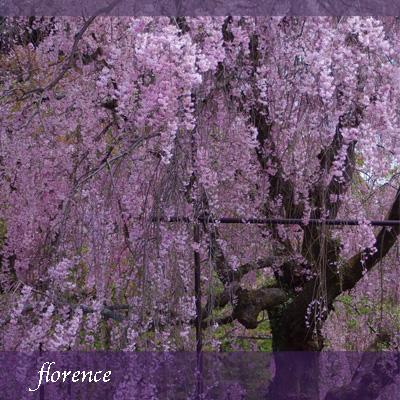 上賀茂神社090403_edited-1