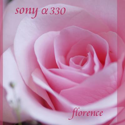 Sonyα090603_edited-1