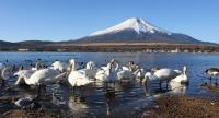 2009年元旦の富士山(山中湖)
