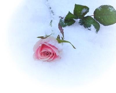 e-flower1-2r.jpg