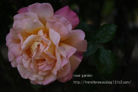 IMG_0181-88.jpg