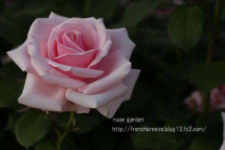 IMG_0203-88.jpg