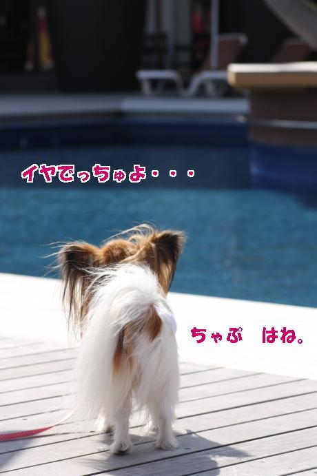 IMG_9601--.jpg
