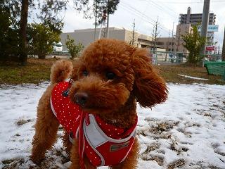 雪遊び~3