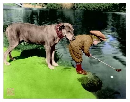 boydog coler