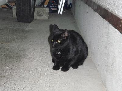 車庫の中の黒猫