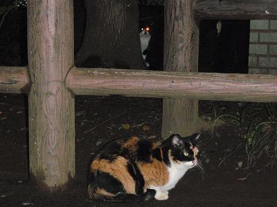 ミケのストーカー猫