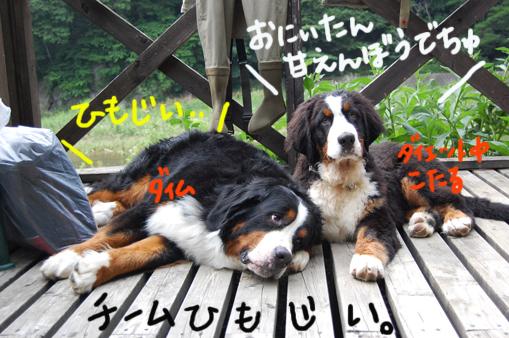 chi-muhimojii.jpg