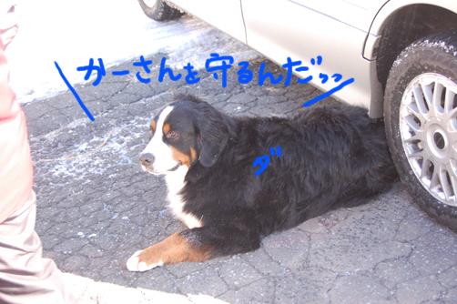 daimumamoru.jpg