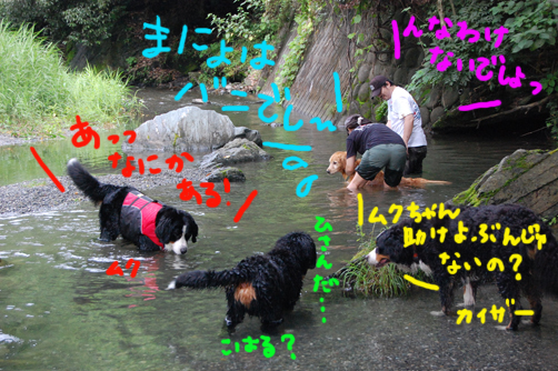 doramagahajimaru2.jpg