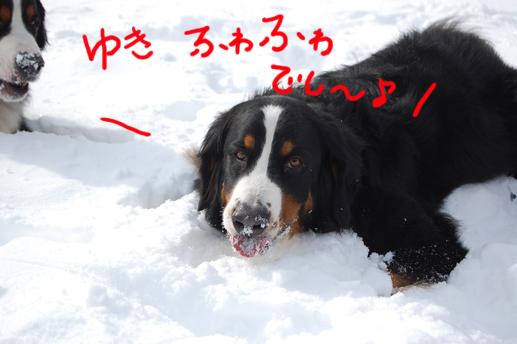 fuwafuwadeshi.jpg