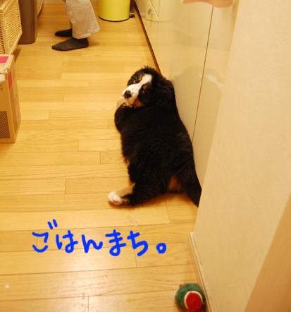 gohannmachi_20090419085427.jpg