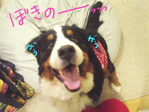 gokinodazo.jpg