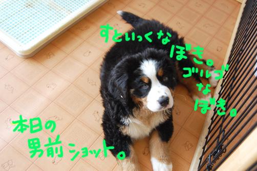 gorugo_20090410232954.jpg