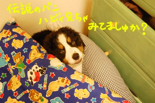 habimitemasyuka_20090410233420.jpg