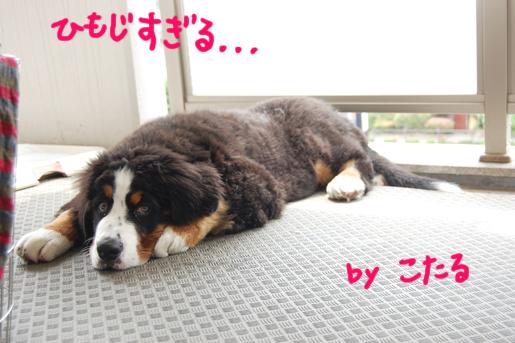 himojisugury.jpg