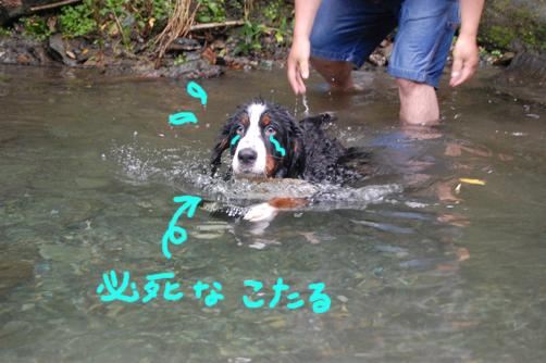 hisshinakotaru1.jpg