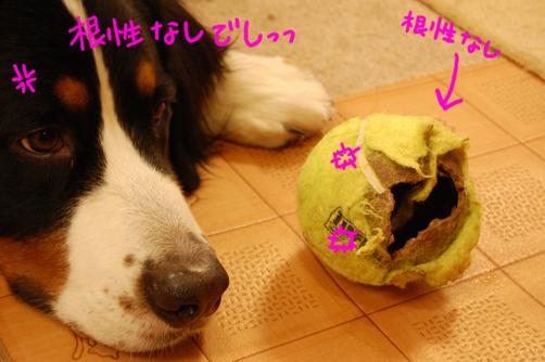 konnjyounashi.jpg