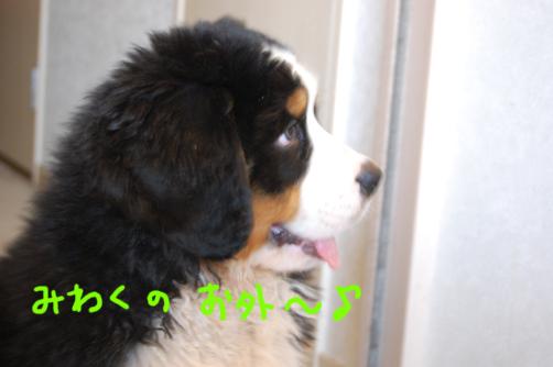 miwaku_20090419085503.jpg