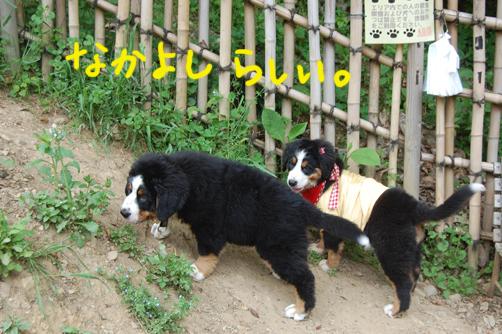 nakayoshi6.jpg