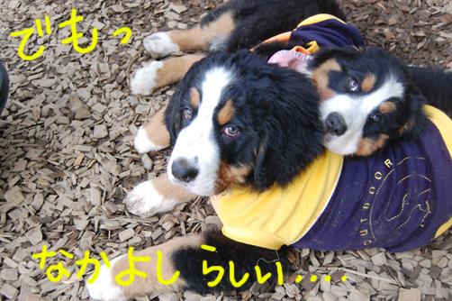 nakayoshirashii2.jpg
