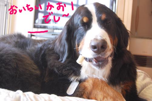 oichiikaodeshi.jpg