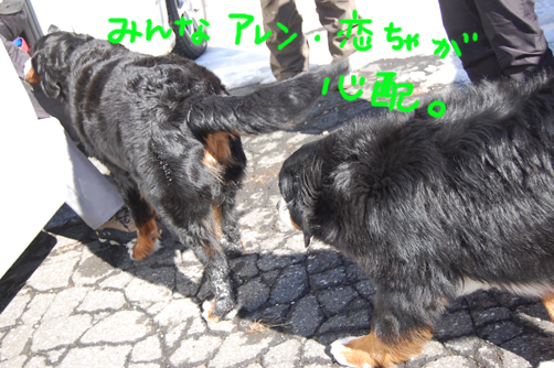 shinnpai_20090213225445.jpg