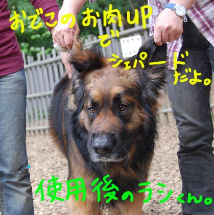 shiyougorashi.jpg